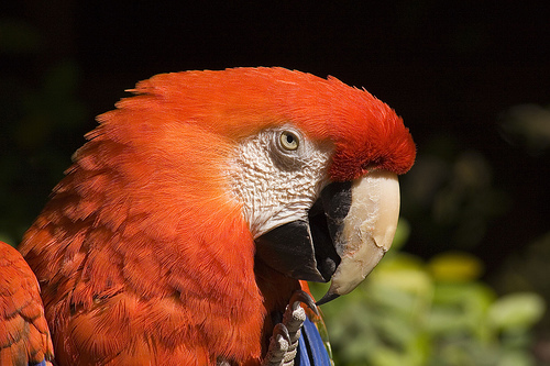 File:This Parrot Is Not Dead!.jpg