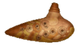 Flöte des Phantoms