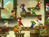 Parrot Pairs