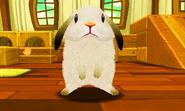 Weißer Hase 1