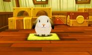 Weißer Hase