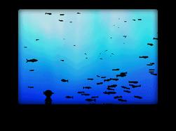 Aquarium Orb room 5