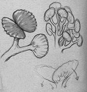 Markel (foglie)