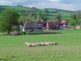 Little Lamb Village