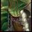 Icon Elven Camouflage