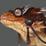 Icon Lizard Soul
