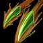 Cassiopeia Doppelzahn alt