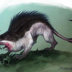 Wharf Rat Concept 1
