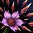 Zyra Tödliche Blüte alt
