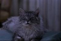 That-darn-cat-disneyscreencaps.com-228