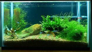 Fish-tank-14