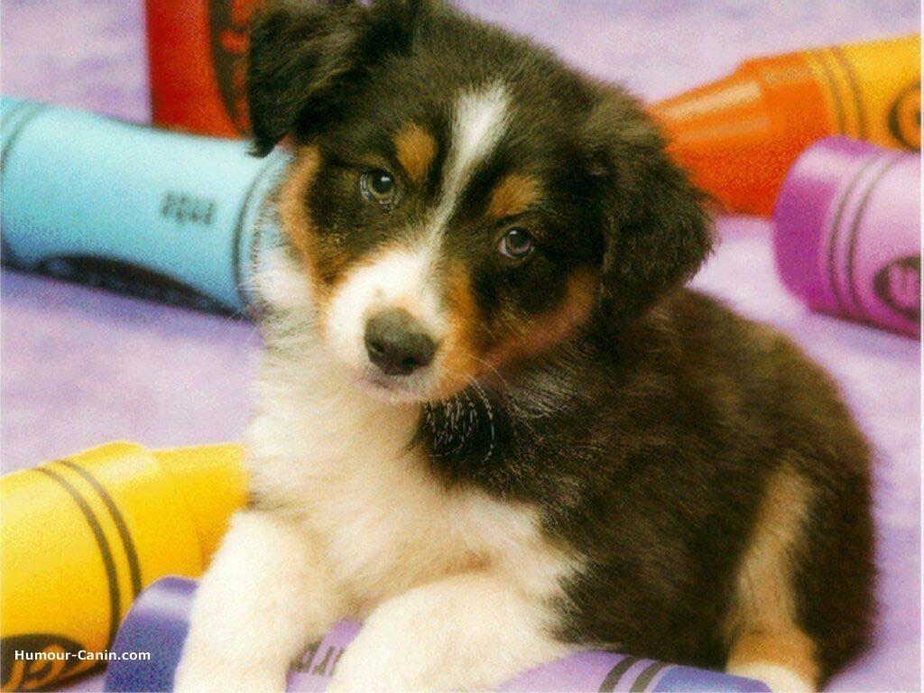 Image chien trop mignon wiki - Jeux d animaux trop mignon ...