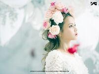 Rose Promo 4