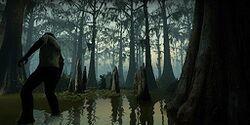 C3m2 swamp