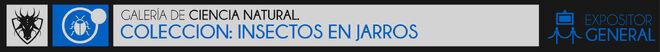 INSEC EN TARROS-01