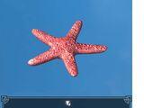 Starfish - Red