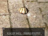 Scallop Shell - Double-Striped (1)