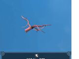 Coral - Red