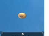 Pansy Shell - Brown