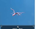 Coral - Pink