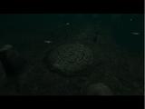 Spirit Forge (Soul Reaver 2)