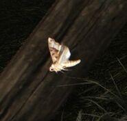 Nosgoth-Animals-Moth