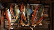 Nosgoth-Animals-Fish1