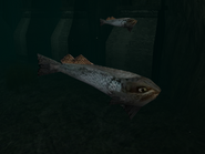 SR2-Animals-Fishes