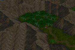 Westvozforest