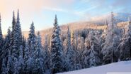 Snowy forest mountain