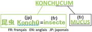 Origine du nom Konchucum