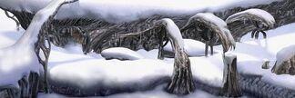 Snow Fields 1