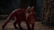 Red Jaguar in the TV Movie