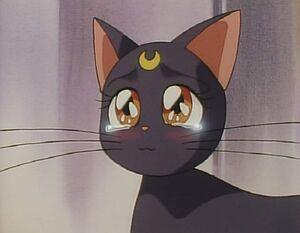 Luna happy tears