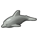 Icon Creature Dolphin