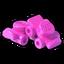 Icon Item Rollerskate Pink