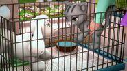 Caniche et chat-Une croisière avec les dauphins
