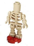 2254 Skelett