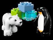 10501 Les animaux polaires du zoo