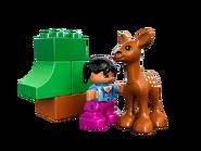 10582 Les animaux de la forêt 5