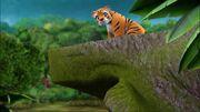 Tigresse pont-À la recherche du futur marié