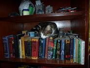 Cat in shelf