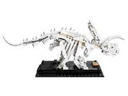 21320 Les fossiles de dinosaures 18