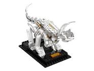 21320 Les fossiles de dinosaures 7