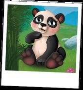 Photo Bambou