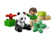 6173 Le panda