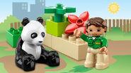 6173 Le panda 2