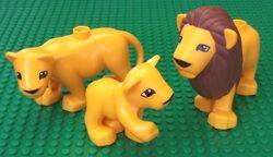 Lionsduplo