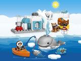 10803 Les animaux de l'Arctique