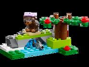 41046 L'ours brun et sa rivière 2